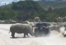 Rinoceronte vehiculo