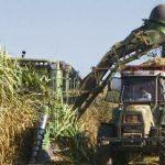 Precio del bioetanol: recurso de amparo de los azucareros