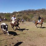 Séptimo festival del caballo criollo en la  Rural Jujeña